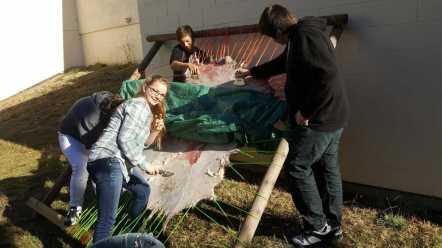 Jackson students working on a deer hide