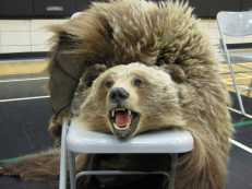 """Laura Grizzleypaws """"Grizz"""""""